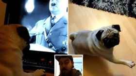 El hombre enseñaba al perro vídeos de Hitler.