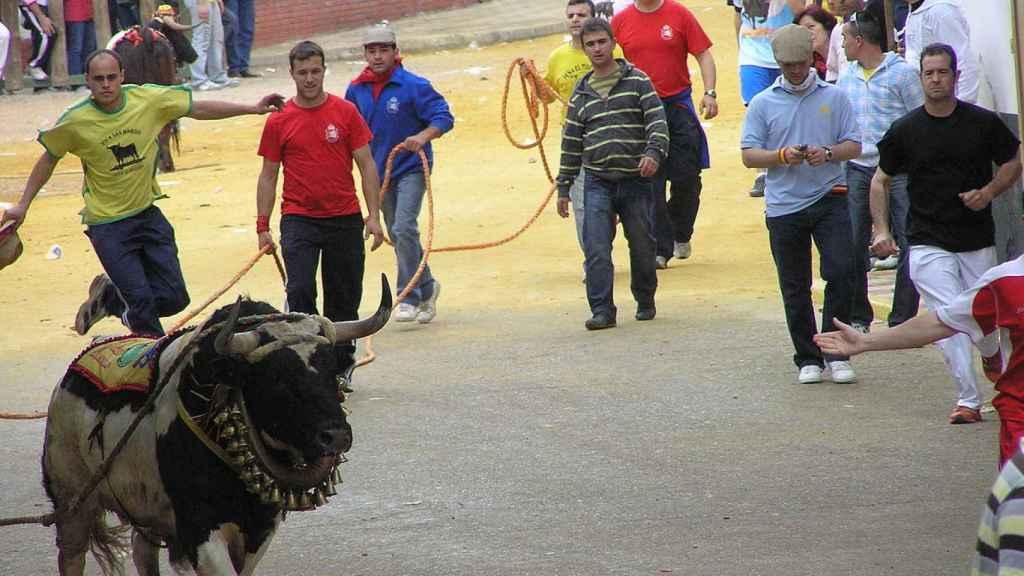 Imagen de la fiesta de toros 'ensogaos' de Beas de Segura (Jaén).
