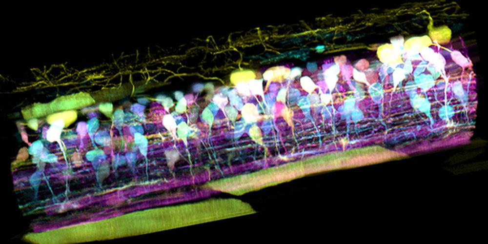 video celulas 3d 1