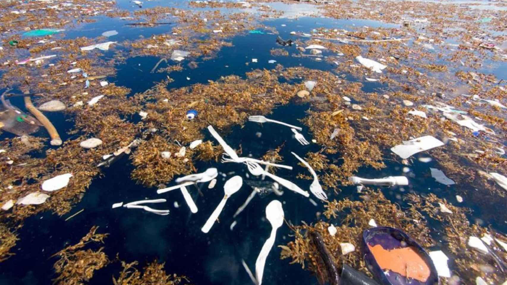 El Plástico Nos Mata Cubiertos Desechables Una Hora De Merendola Y 400 Años En El Mar