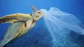 Una tortuga intenta comerse una bolsa de plástico al confundirla con comida.