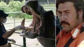 Orión, uno de los hipopótamos, y  Pablo Escobar fotografiado a finales de los setenta.