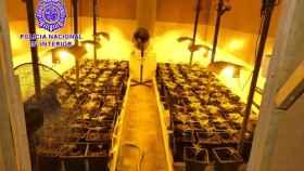 plantacion marihuana cisterniga valladolid 1