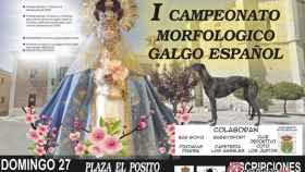 Valladolid-valdestillas-galgos-campeonato-morfologico