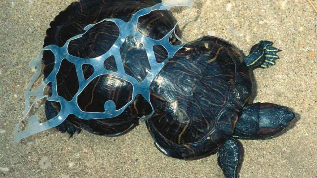Plastic turtle.