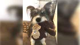 Este adorable perrito es la pesadilla de Internet por una foto mal tomada