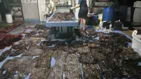 Las 80 bolsas de basura recuperadas del estómago de la ballena en Songkhla, Tailandia.
