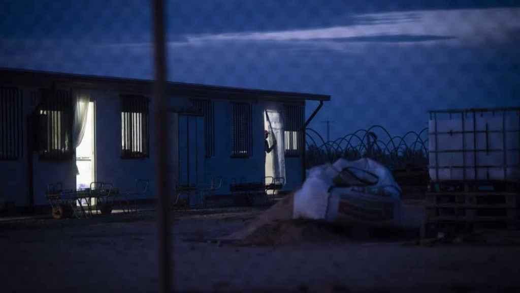 Una jornalera se asoma a la puerta del barracón en el que reside, minutos antes de comenzar su jornada laboral en una finca de fresas de la provincia de Huelva.