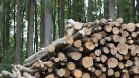 Palencia-biomasa-forestalia-trabajo