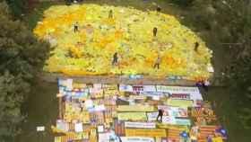 Vista aérea de la finca en la que almacenan la tonelada de lazos amarillos.