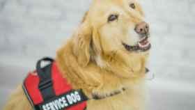 El drama diario que viven muchos ciegos con sus perros-guia