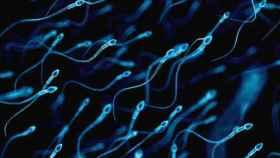 Un montón de espermatozoides luchando por colonizar un óvulo.