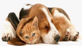 Lo de los perros y los gatos se llevan mal tiene algo de mito.