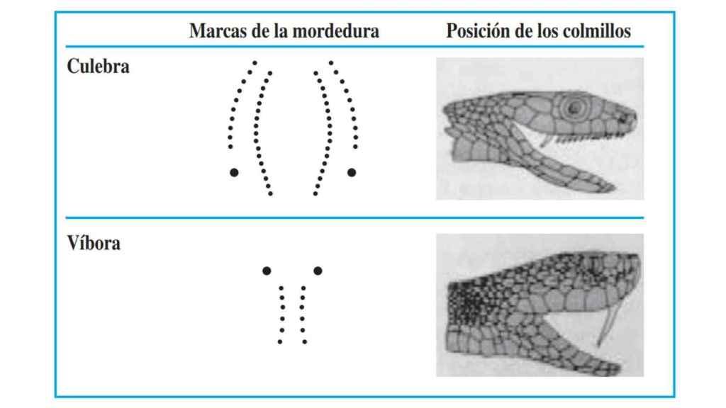 Diferencia entre la mordedura de culebra y víbora.