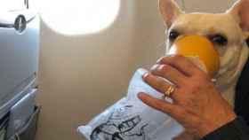 Al perro consiguieron salvarlo con mucha rapidez.