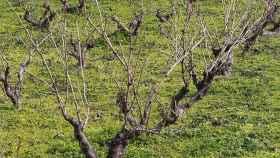regional-campo-cultivo-vinedo