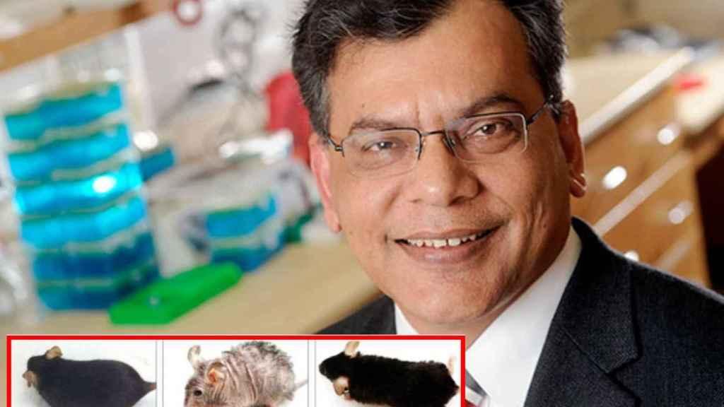 El doctor Keshav Singh y sus ratones, envejecidos prematuramente y posteriormente restaurados.