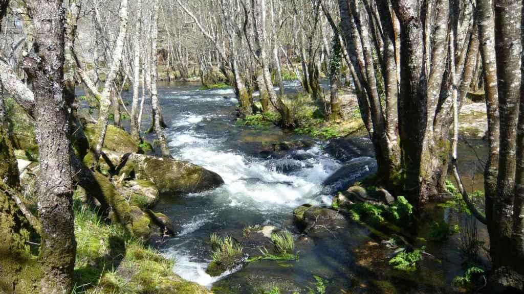 Zona boscosa del Parga
