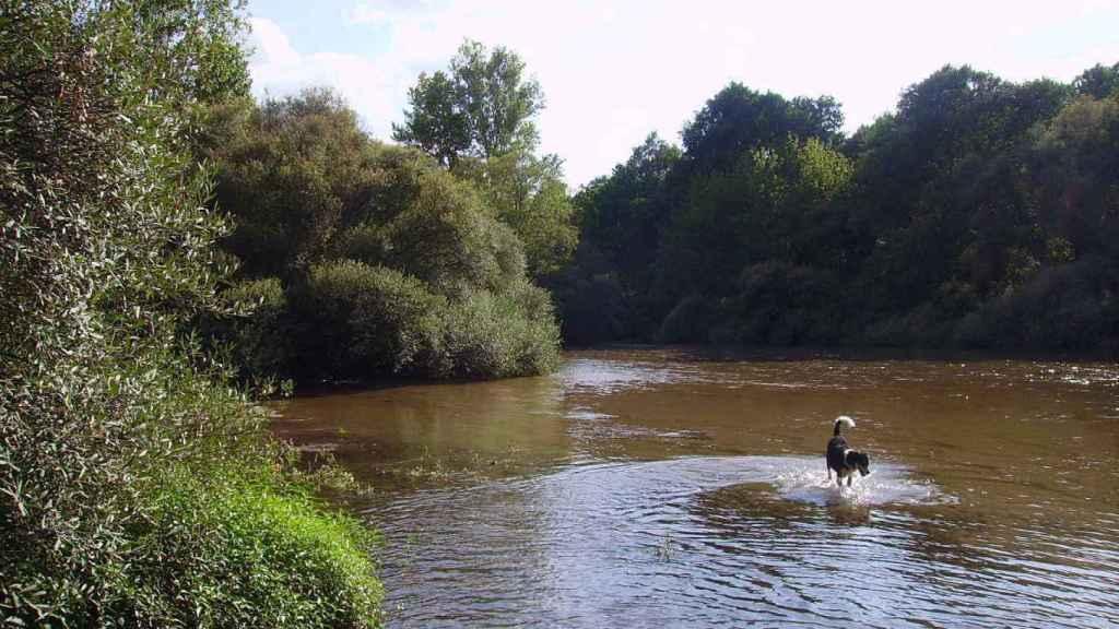 Un perro disfruta de las aguas del Alberche