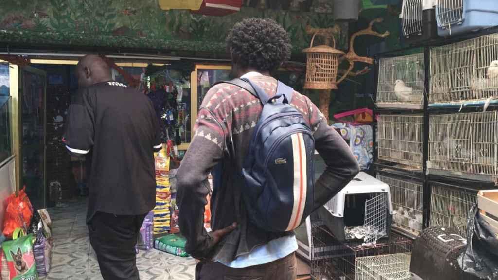 Mercado de animales en Tánger para comprar los pavos que luego serán sacrificados.