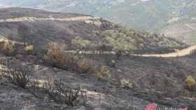 Foto Arboles incendio Encinedo