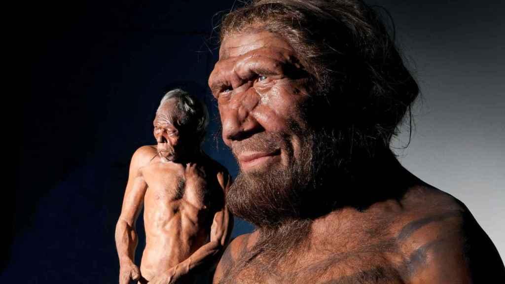 Modelo de homo sapiens (a la izquierda) y neandertal (a la derecha).