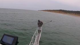 Un tiburón blanco salta metro y medio para intentar comerse a un científico