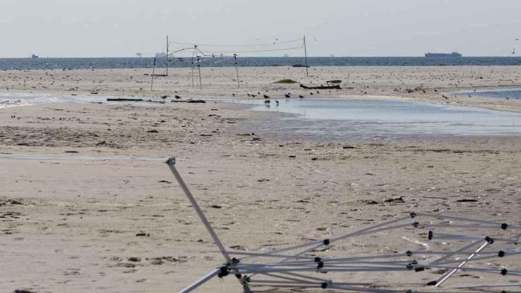 El arenal es zona de cría de aves protegidas.