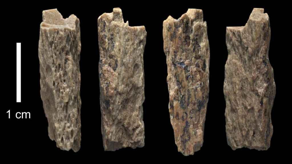 Los restos óseos encontrados en la cueva de Denísova (Rusia).