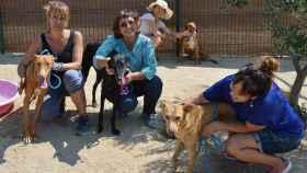 FOTO: Twitter Animal Rescue España