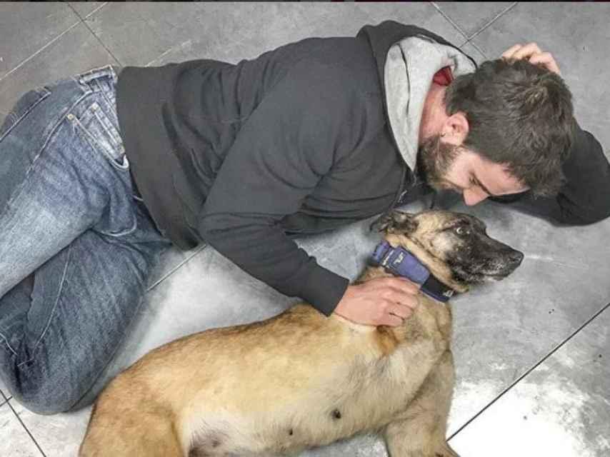 En 'El Hormiguero' le busca familia a perros abandonados.