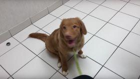 Un cachorro se agarra un colocón con la metanfetamina olvidada en un motel