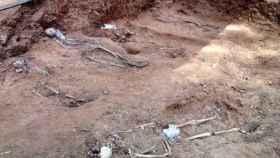 Fosa común exhumada en Sevilla.