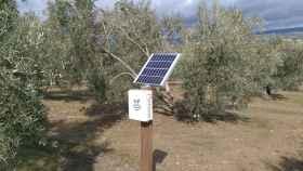 Los sensores miden en tiempo real la humedad de los cultivos.