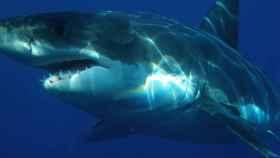Un tiburón deambula por el fondo marino.
