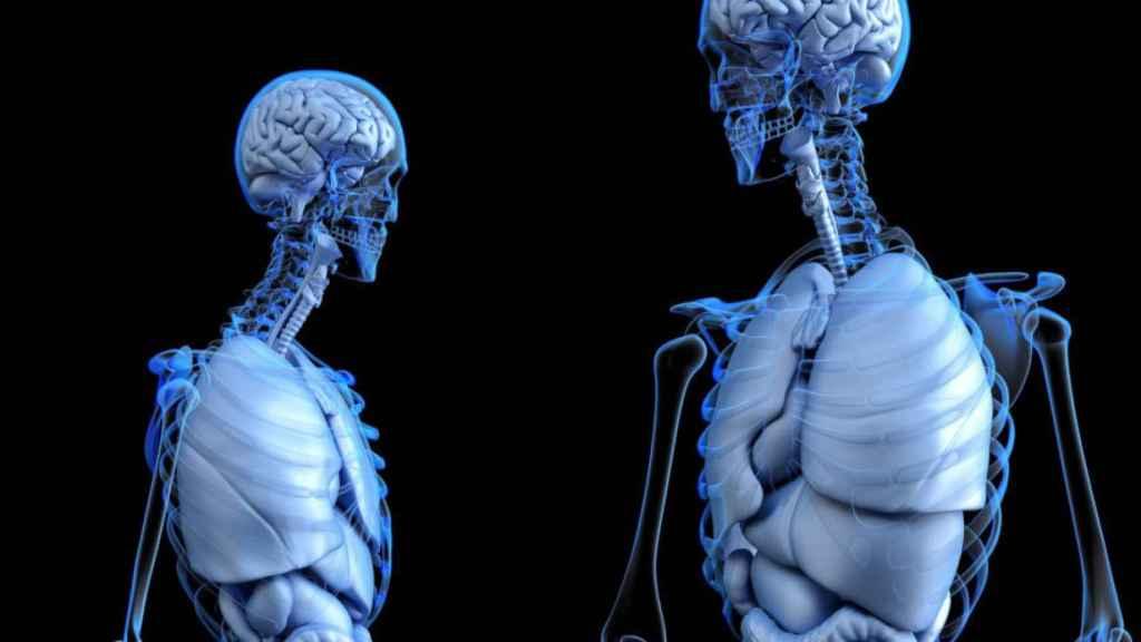 cuerpo humano anatomia