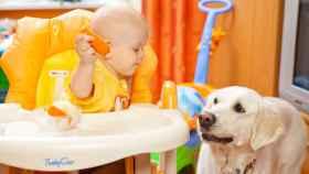 Por extraño que parezca, el niño corre más peligro que el perro.