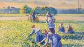 El cuadro del maestro impresionista Camille Pissarro 'La cosecha de guisantes' (1887).