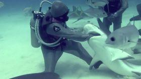 La buceadora que mete su mano en la boca de tiburones para quitar garfios enganchados