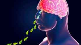 Este protozoo penetra por los orificios nasales hasta alcanzar nuestro cerebro