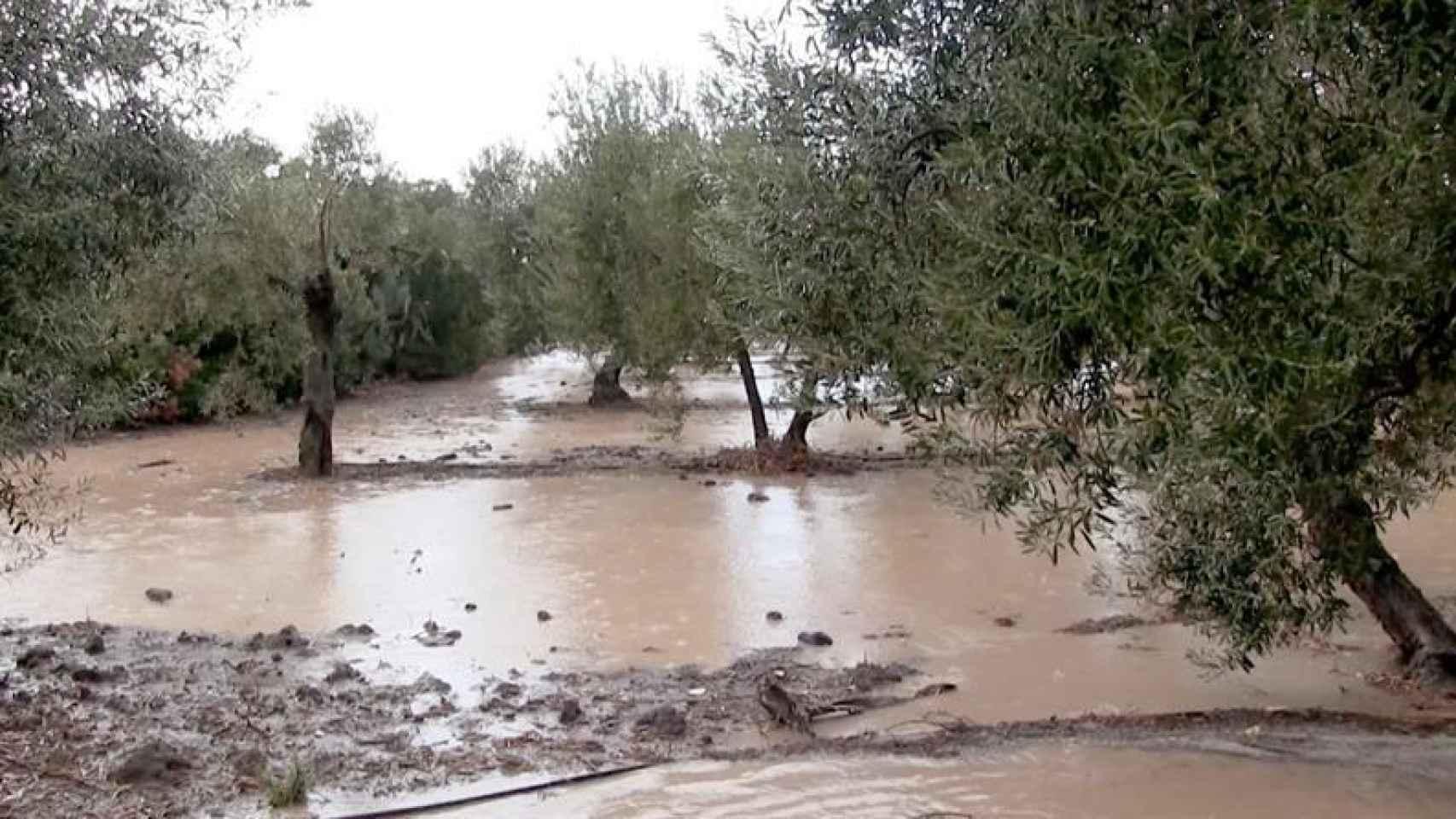 Vista de los campos en los alrededores de Arahal, anegados por la intensa lluvia caída en la provincia de Sevilla.