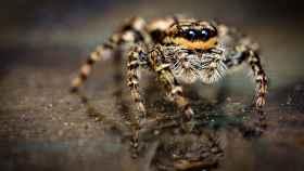 Quisieron matar una araña y lo que montaron fue un pifostio