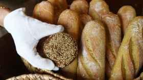 Pan de trigo e integral.