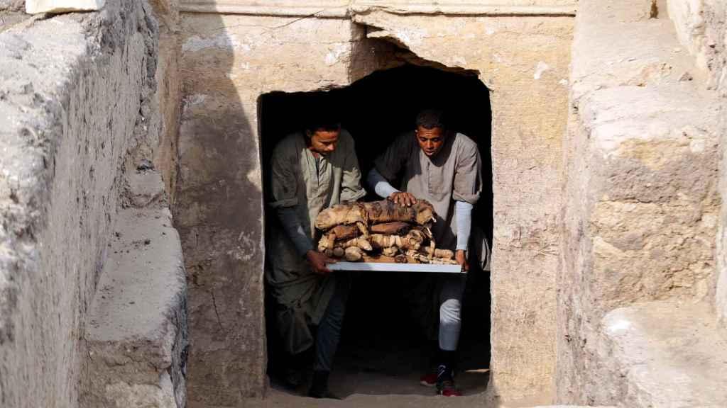 Los arqueólogos extraen las momias de los gatos en el complejo funerario de Saqqara.