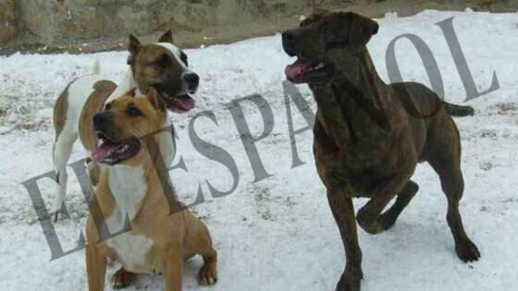 Varios de los perros de la familia afectada por la tragedia.