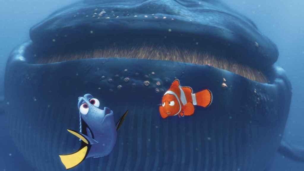 El pez cirujano Dory intenta comunicarse con una ballena australiana