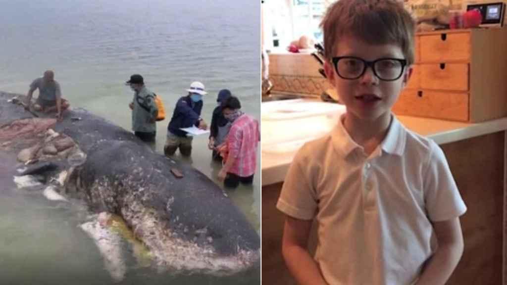 El cachalote muerto en Indonesia y William.