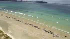 Las 145 ballenas que han aparecido varadas en Steward Island.