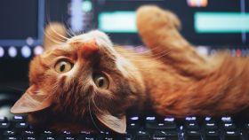 Un japonés crea la solución para que el gato no se te duerma en el teclado