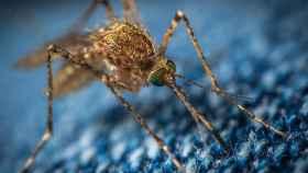 Mosquito portada